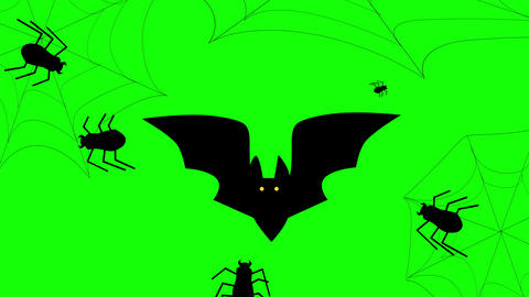Halloween Beetle, Bat and Web animation on a green background. 4k Animation