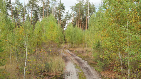 Movement forward along road between small birches Footage