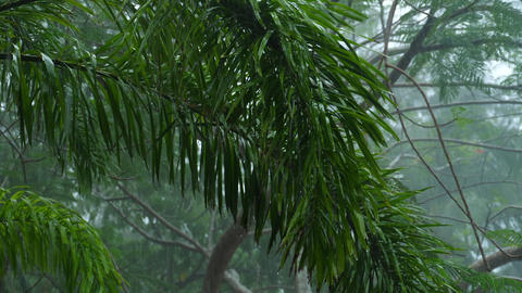 Tropical downpour outdoors Footage