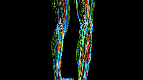 Medical footage with x-ray view of legs part showing different body systems ライブ動画