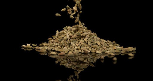 Cardamom, elettaria Cardamomum, spice falling against Black Background, Slow Motion 4K Footage