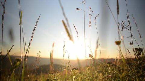 Herbs battered by wind and sun illuminated at sunset over the hills found 09 Footage