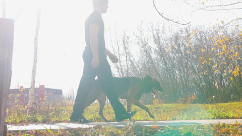 A man trainer walking with his german shepherd dog in the park at bright day Footage