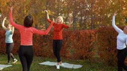 Fitness woman training port de bras exercise in autumn park. Woman group Footage