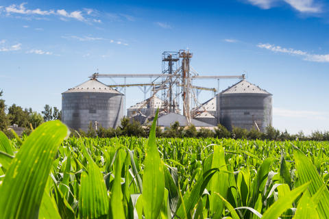 corn plantation and defocused silos in the background Photo