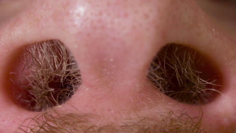Hairy nostrils and nose of caucasian man close up in macro Live Action