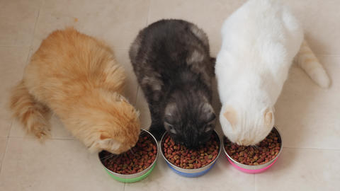 Top view of three cats eat dry food from metal bowls Live Action