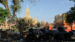 Chickens find food in rubbish at That Luang temple,Vientiane,Laos Footage