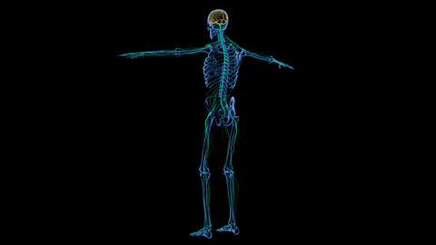 Full body medical footage with x-ray view showing skeletal and nervous system Footage