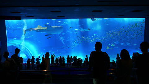 沖縄11 美ら海水族館 4K Footage