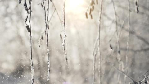 Frost falling from winter tree slowmotion Footage