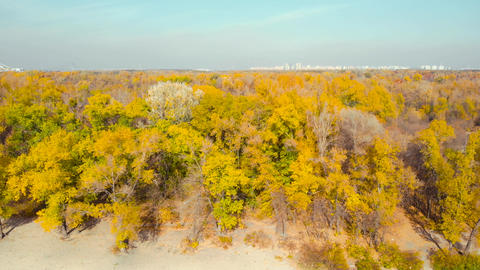 Autumn Colourful Landscape From Above Live Action