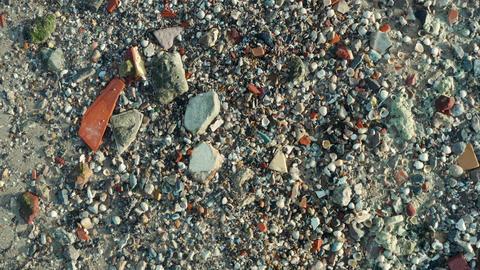 Seashells - Baie de Canche (France) ビデオ