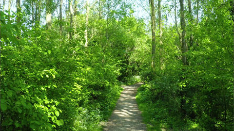 Path in the forest park 2 (Parc Galame, France) Live Action