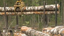 Logging site loading and transportation of felled trees Live Action