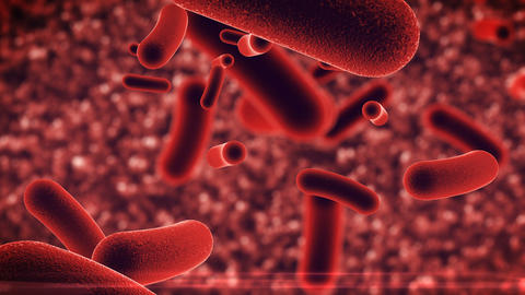 Bacteria infection under microscope Animation