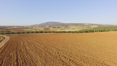 Aerial drone footage of beautiful landscape. Drone view of empty field and olive plantation in the Live Action