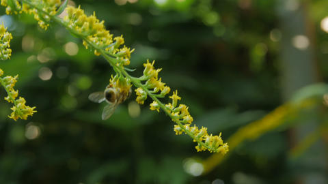 A Bee Collecting Nectar Live Action