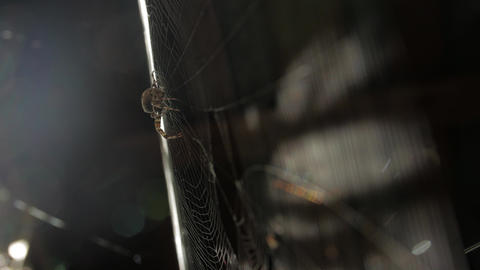 Spider Web And A Sunbeam Live Action