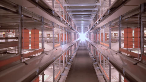 poultry farm farming business Footage