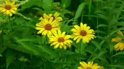 Garden flowers Footage