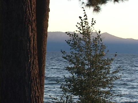 Trees sway in breezes on Lake Tahoe Stock Video Footage