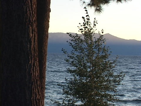 Trees sway in breezes on Lake Tahoe Stock Video Footage