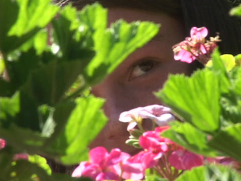 A child peers wistfully through the leaves of pink geraniums Footage