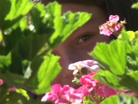 A child peers wistfully through the leaves of pink geraniums Stock Video Footage