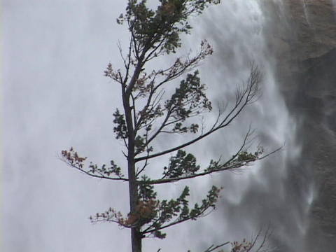 A tree sways near a waterfall Stock Video Footage
