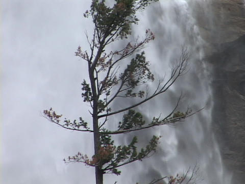 A tree sways near a waterfall Footage