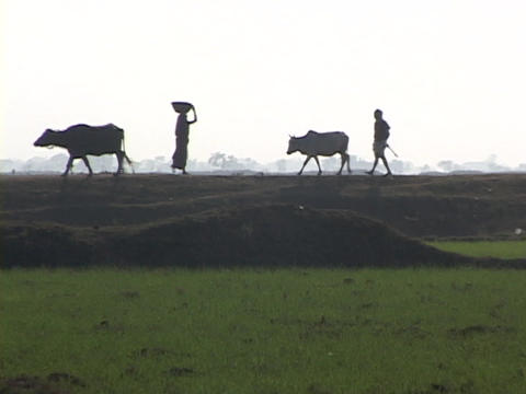 Villagers and farmers walk in silhouette near an Indian... Stock Video Footage