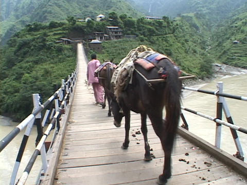 Men with horses cross a high suspension bridge in the Himalayas Footage