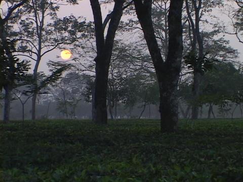 A tea plantation grows near Darjeeling India Stock Video Footage