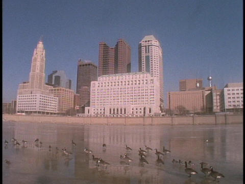 Canadian geese walk across a frozen river in Columbus, Ohio Live Action