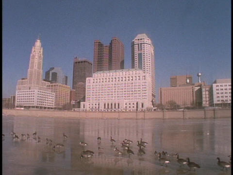 Canadian geese walk across a frozen river in Columbus, Ohio Stock Video Footage