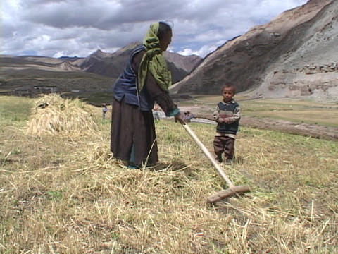 Farmers harvest crops in Tibet Stock Video Footage
