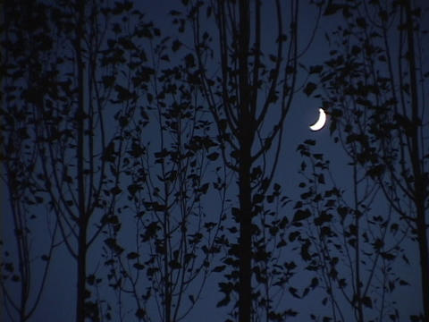 A crescent moon shines behind a grove of trees Stock Video Footage