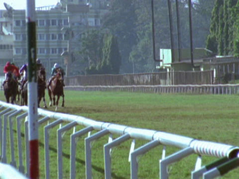 Jockeys and their horses compete on a grass track Stock Video Footage