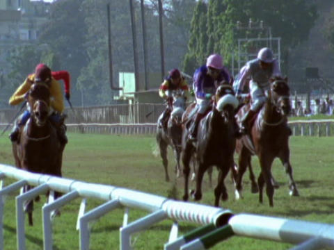 Jockeys and their horses compete on a grass track Footage