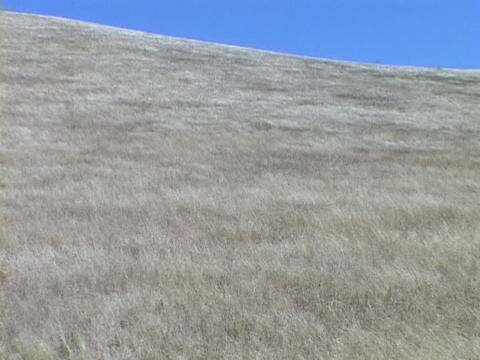 The wind blows the grass in a field in central California Stock Video Footage