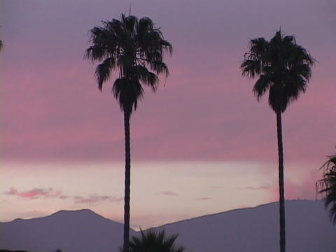 Palm trees stand against a pink sky Footage