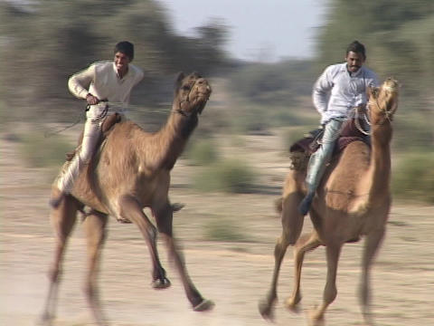 Camels race at the camel festival in India Footage