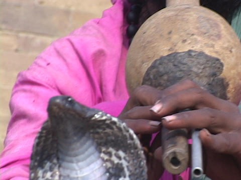 A snake charmer plays music for a cobra snake in India Stock Video Footage