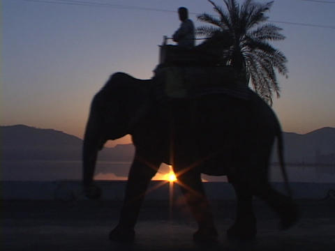 An elephant and rider in silhouette pass by a beautiful... Stock Video Footage