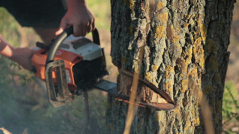 Man sawing a dry tree with chainsaw Footage