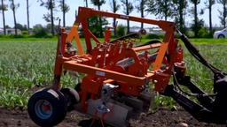 Tractor weeding a garlic field on a sunny day Live Action