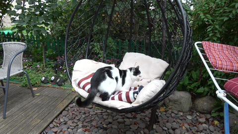 Domestic cat on hanging chair in yard Live Action