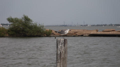 Seagull on a pole in Clear Water Lake Footage