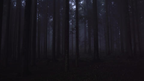 Deep forest with fog in the evening. White sky above tree tops. Horror forest Footage